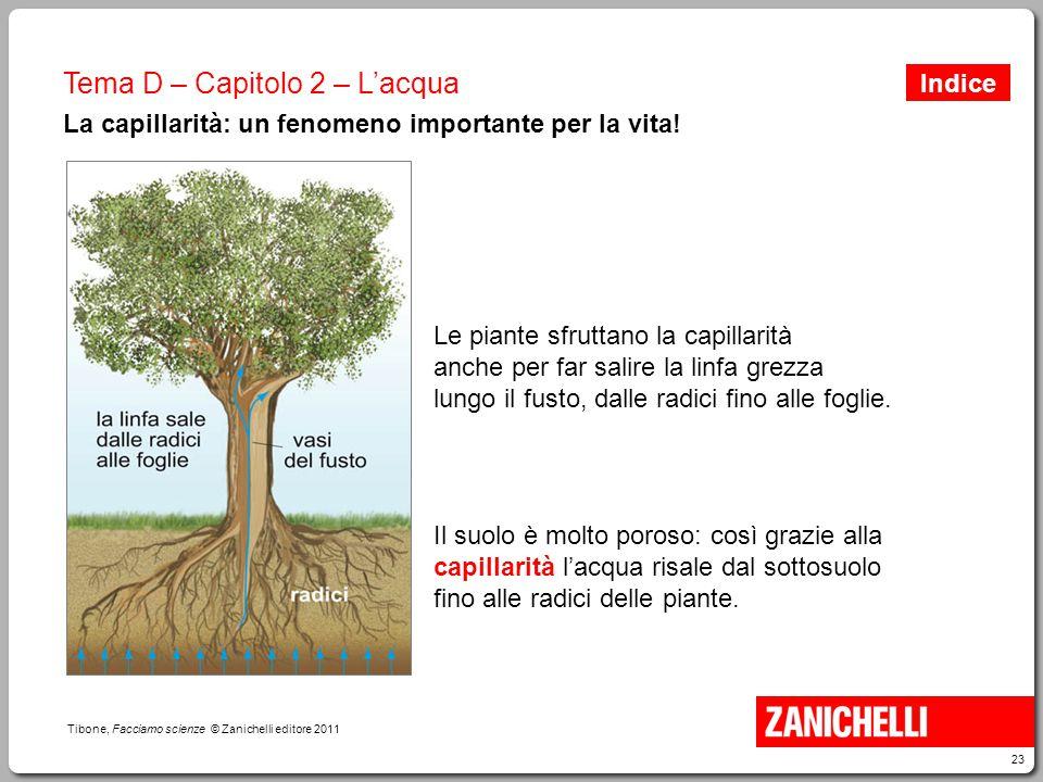 23 Tibone, Facciamo scienze © Zanichelli editore 2011 Tema D – Capitolo 2 – L'acqua La capillarità: un fenomeno importante per la vita! Il suolo è mol
