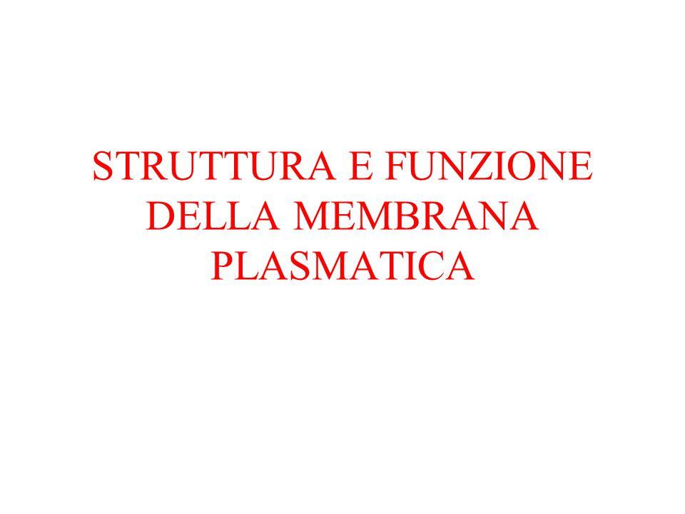 STRUTTURA E FUNZIONE DELLA MEMBRANA PLASMATICA