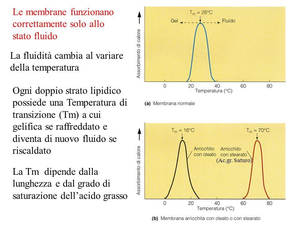 Le membrane funzionano correttamente solo allo stato fluido La fluidità cambia al variare della temperatura Ogni doppio strato lipidico possiede una Temperatura di transizione (Tm) a cui gelifica se raffreddato e diventa di nuovo fluido se riscaldato (Ac.gr.