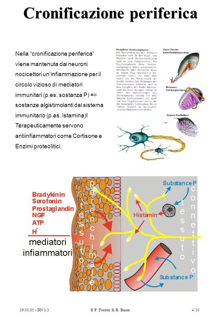 """19.01.05 - DN 1.3© P. Forster & B. Buser4/10 Cronificazione periferica Nella """"cronificazione periferica"""" viene mantenuta dai neuroni nocicettori un'in"""