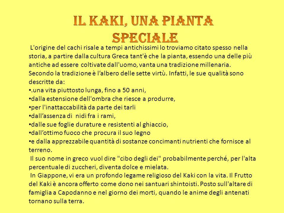 Palermo - Anche quest'anno a Misilmeri, il 10 ottobre si svolge la Sagra del Kaki , iniziativa di promozione del prodotto tipico locale, degustazioni di prodotti tipici, frutti e pasticceria a base di cachi.