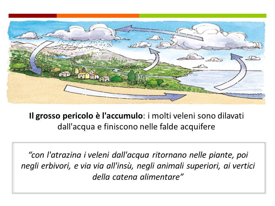 In Italia sono attualmente in commercio 35 tipi di pesticidi che secondo la severissima EPA (l'agenzia americana per la protezione dell'ambiente) sono
