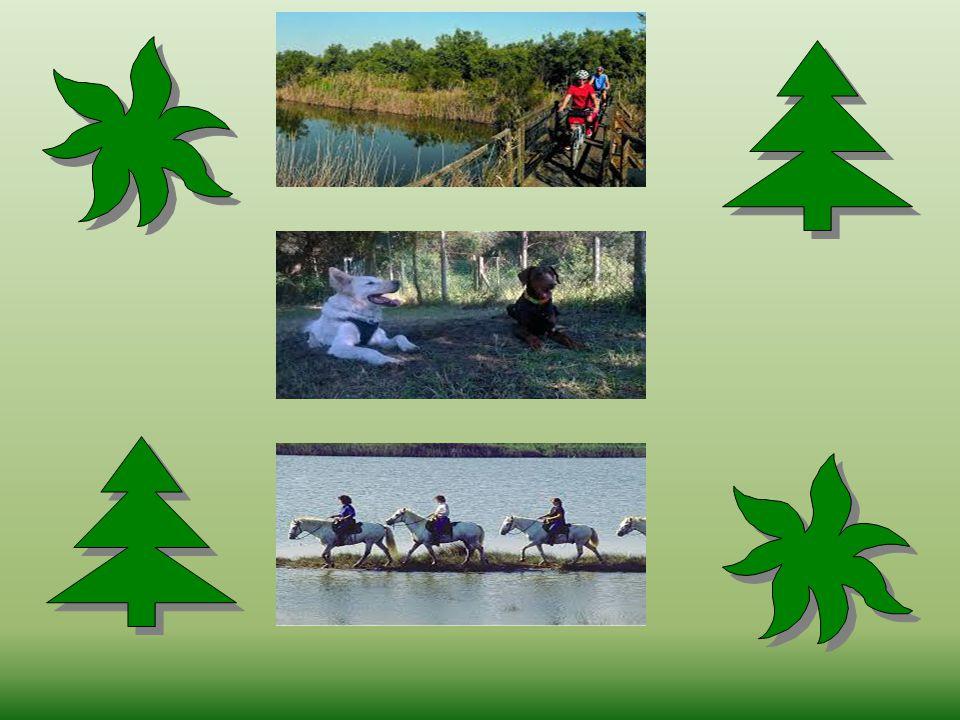 Durante il corso delle settimana verranno organizzate le seguenti escursioni/attività didattiche: - un Mini-Safari didattico in mountain bike all'inte