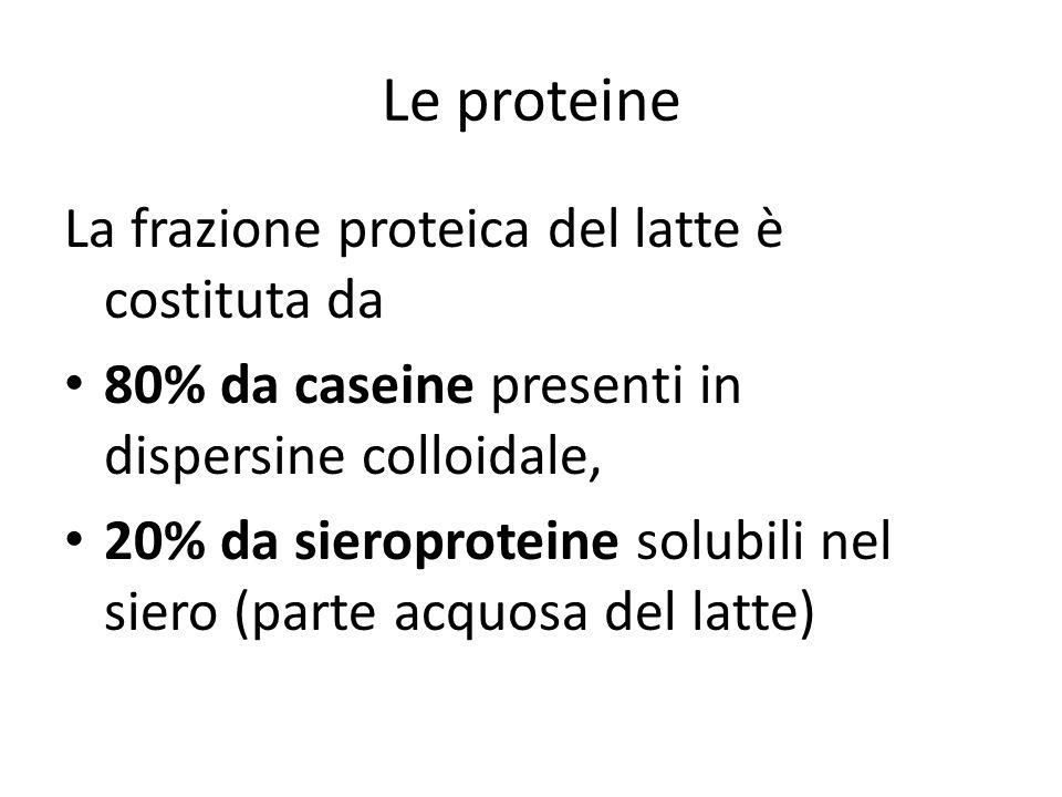 Le proteine La frazione proteica del latte è costituta da 80% da caseine presenti in dispersine colloidale, 20% da sieroproteine solubili nel siero (p