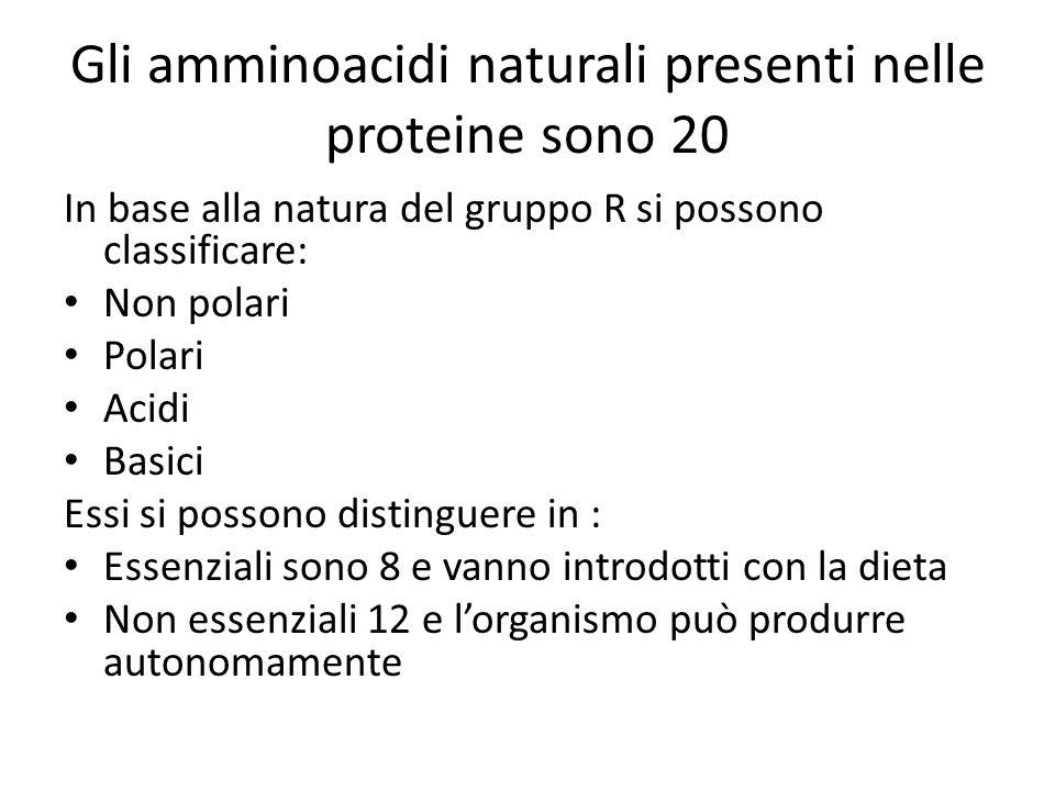 Gli amminoacidi naturali presenti nelle proteine sono 20 In base alla natura del gruppo R si possono classificare: Non polari Polari Acidi Basici Essi