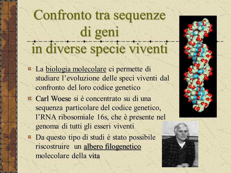 Confronto tra sequenze di geni in diverse specie viventi La biologia molecolare ci permette di studiare l'evoluzione delle speci viventi dal confronto
