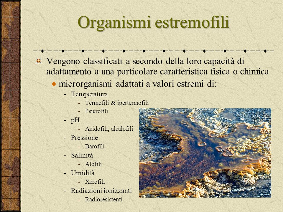 Organismi estremofili Vengono classificati a secondo della loro capacità di adattamento a una particolare caratteristica fisica o chimica microrganism