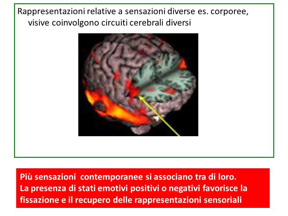 Rappresentazioni relative a sensazioni diverse es. corporee, visive coinvolgono circuiti cerebrali diversi Più sensazioni contemporanee si associano t