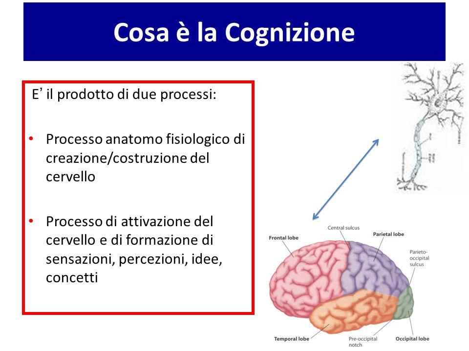 Cosa è la Cognizione E ' il prodotto di due processi: Processo anatomo fisiologico di creazione/costruzione del cervello Processo di attivazione del c