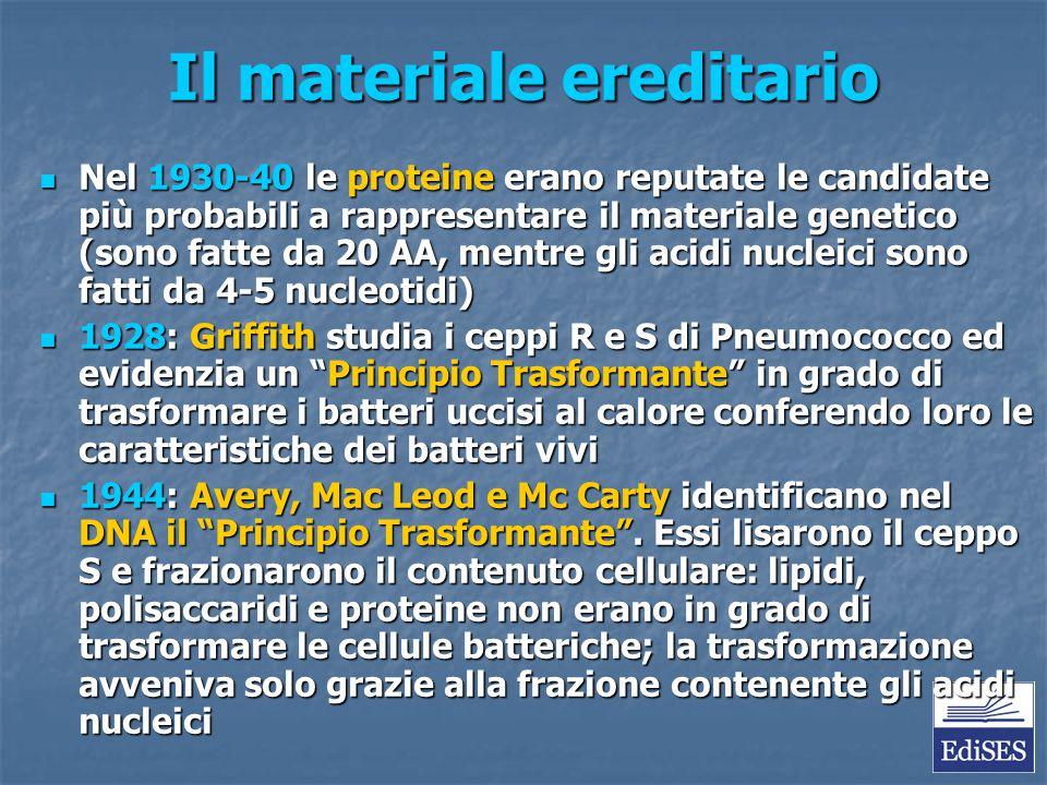 Il materiale ereditario Nel 1930-40 le proteine erano reputate le candidate più probabili a rappresentare il materiale genetico (sono fatte da 20 AA,