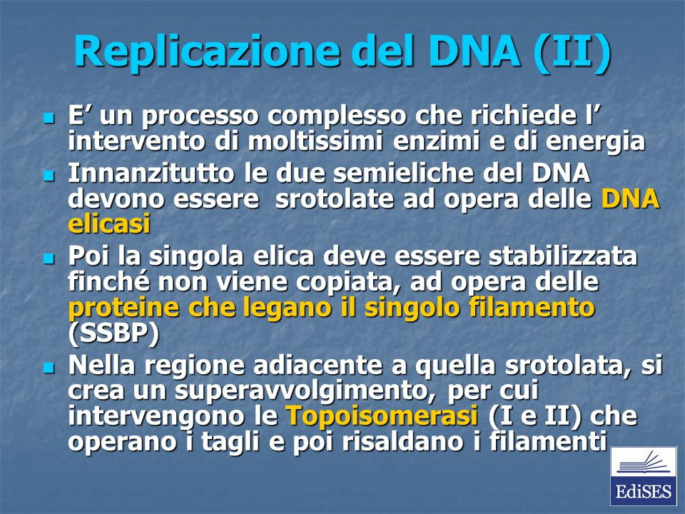 Replicazione del DNA (II) E' un processo complesso che richiede l' intervento di moltissimi enzimi e di energia E' un processo complesso che richiede