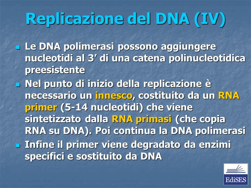 Replicazione del DNA (IV) Le DNA polimerasi possono aggiungere nucleotidi al 3' di una catena polinucleotidica preesistente Le DNA polimerasi possono