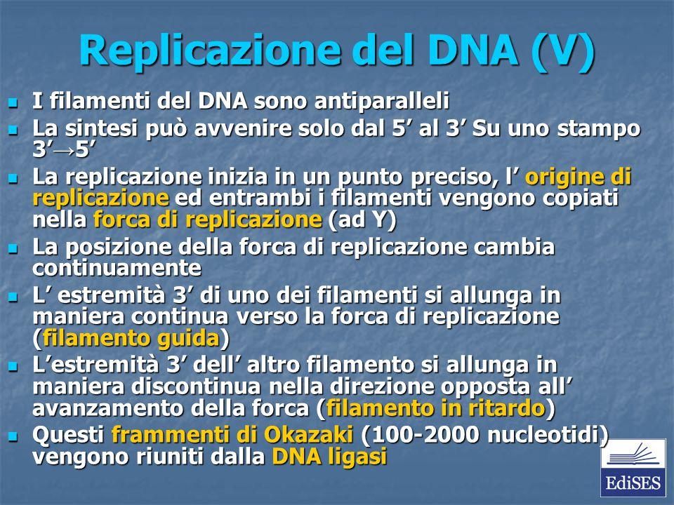 Replicazione del DNA (V) I filamenti del DNA sono antiparalleli I filamenti del DNA sono antiparalleli La sintesi può avvenire solo dal 5' al 3' Su un