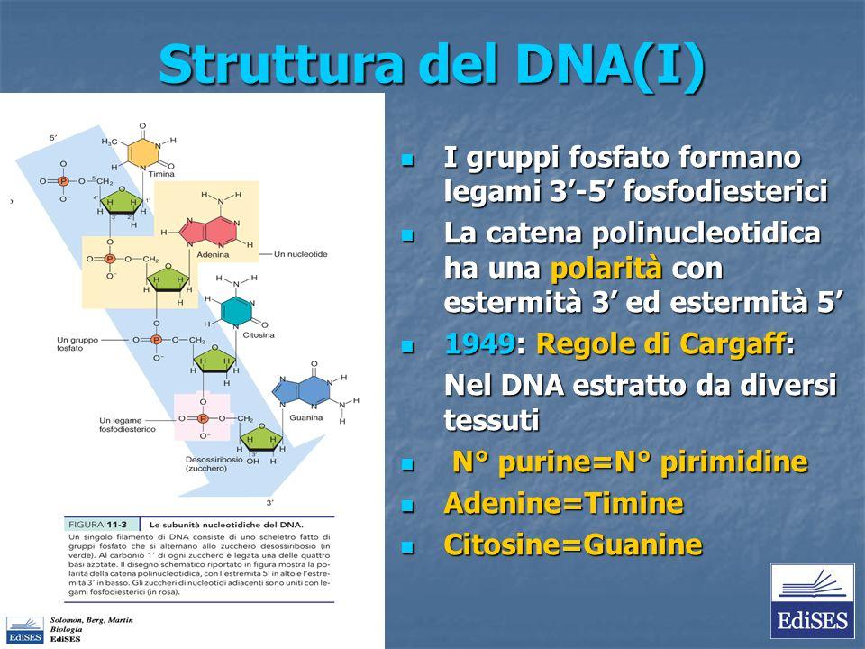 Struttura del DNA(I) I gruppi fosfato formano legami 3'-5' fosfodiesterici I gruppi fosfato formano legami 3'-5' fosfodiesterici La catena polinucleot
