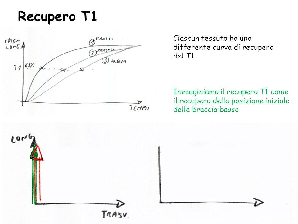 Recupero T1 Ciascun tessuto ha una differente curva di recupero del T1 Immaginiamo il recupero T1 come il recupero della posizione iniziale delle brac