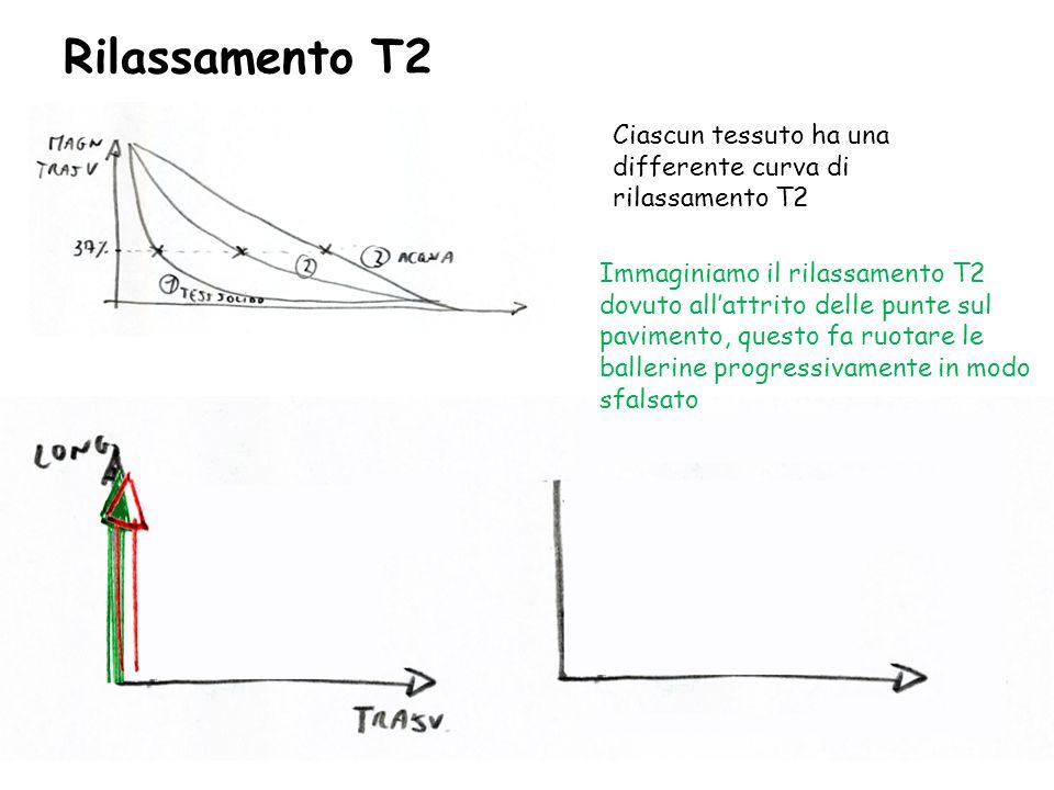 Rilassamento T2 Ciascun tessuto ha una differente curva di rilassamento T2 Immaginiamo il rilassamento T2 dovuto all'attrito delle punte sul pavimento