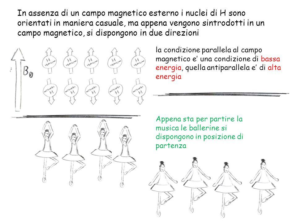 In assenza di un campo magnetico esterno i nuclei di H sono orientati in maniera casuale, ma appena vengono sintrodotti in un campo magnetico, si disp