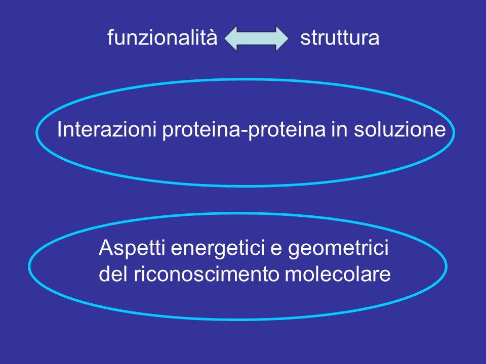 funzionalità struttura Interazioni proteina-proteina in soluzione Aspetti energetici e geometrici del riconoscimento molecolare