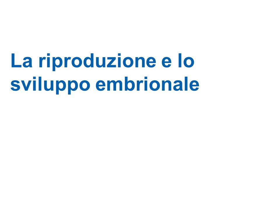 Alcuni dispositivi anticoncezionali: Cerotto Diaframma Spermicida Profilattico Pillola