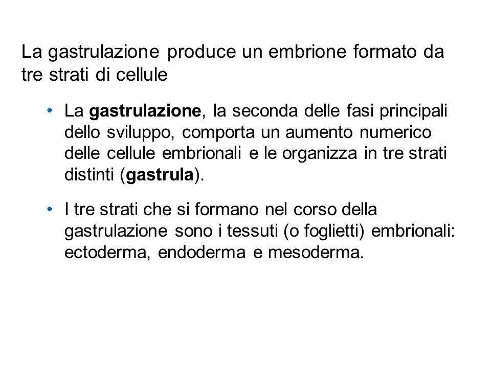 La gastrulazione produce un embrione formato da tre strati di cellule La gastrulazione, la seconda delle fasi principali dello sviluppo, comporta un a