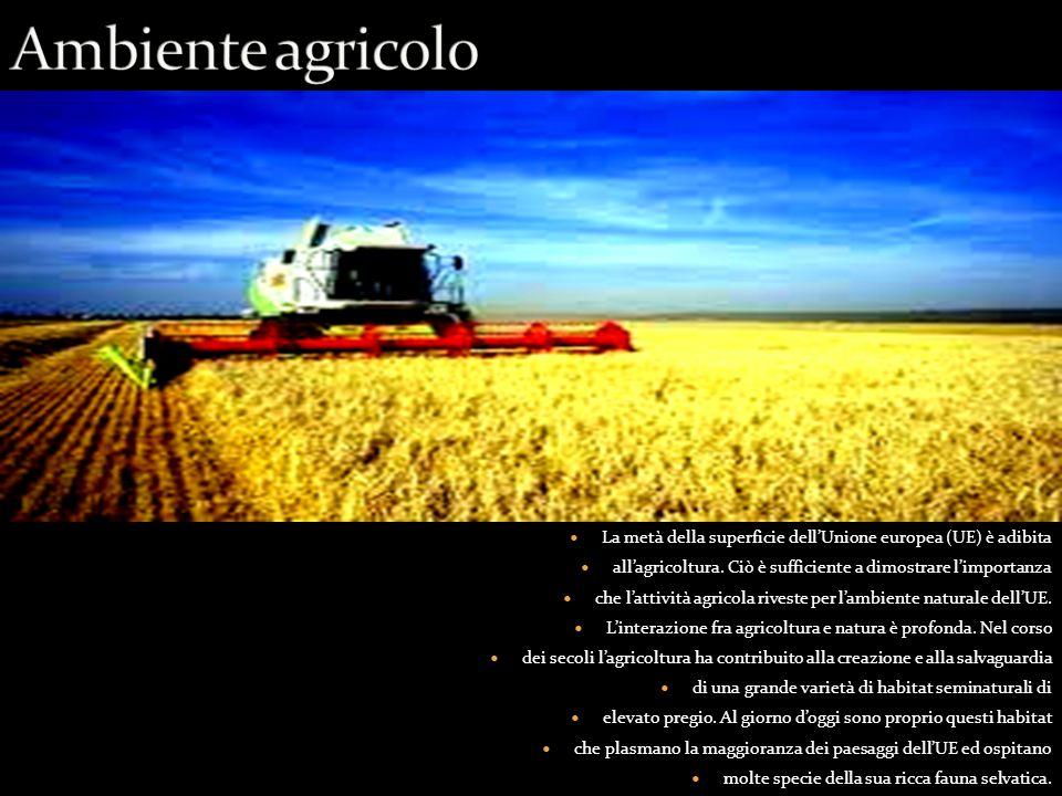 La metà della superficie dell'Unione europea (UE) è adibita all'agricoltura.