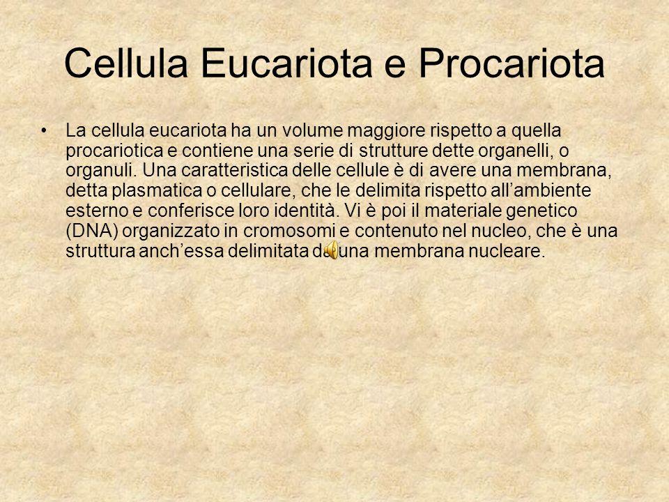 Cellula Eucariota e Procariota La cellula eucariota ha un volume maggiore rispetto a quella procariotica e contiene una serie di strutture dette organ