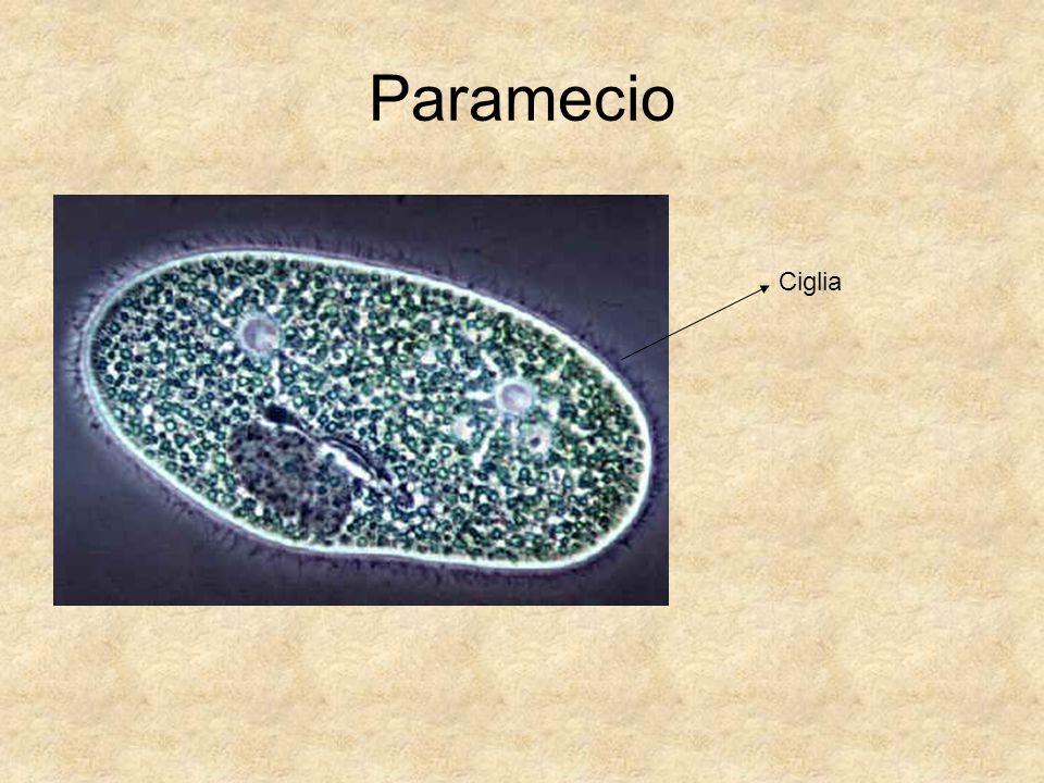 La cellula è l'unità fondamentale degli organismi viventi, ed è in grado di vivere in maniera autonoma e di riprodursi.