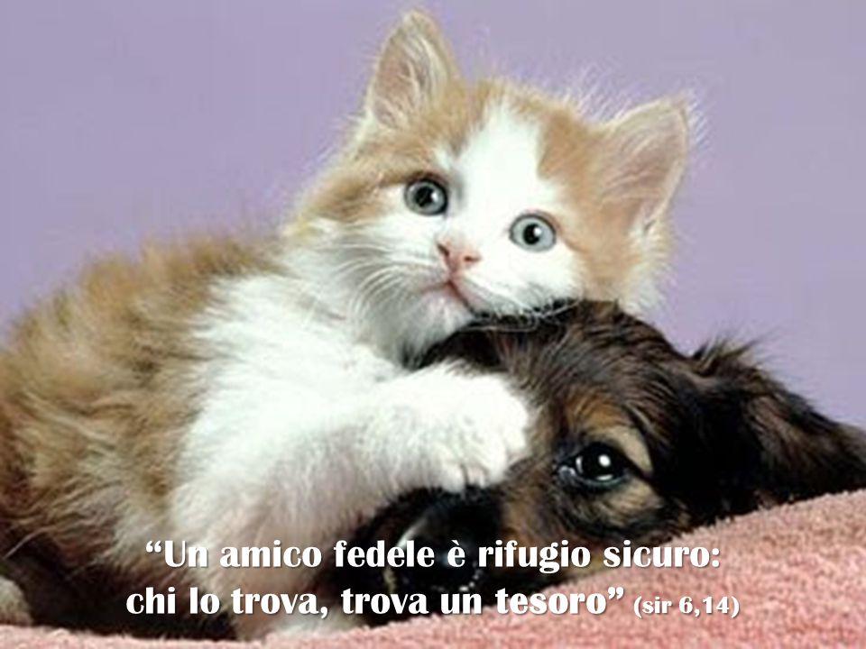 """""""Un amico fedele è rifugio sicuro: chi lo trova, trova un tesoro"""" (sir 6,14)"""