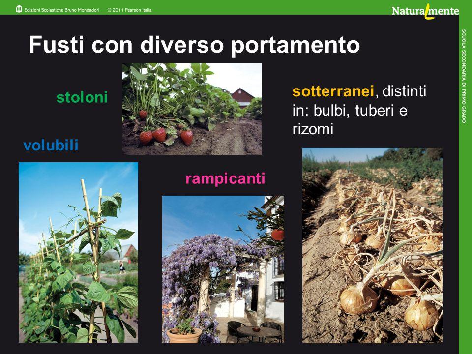 A che cosa servono le foglie Le foglie sono organi fondamentali per le piante.