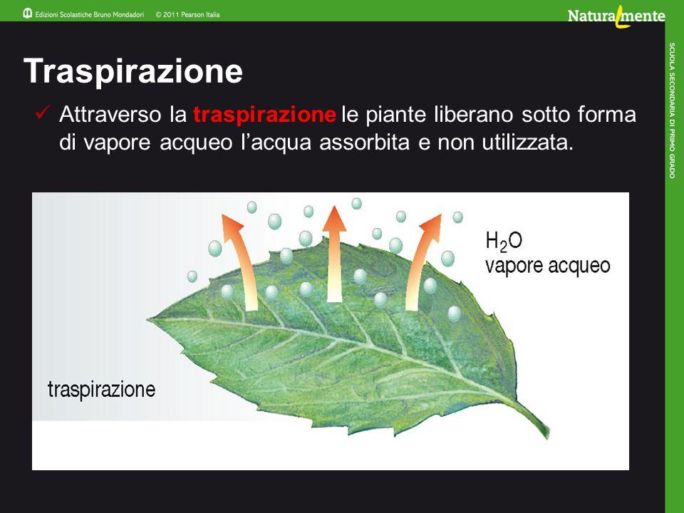 Riflettiamo insieme In quale modo le piante si sono adattate alla vita sulle terre emerse.