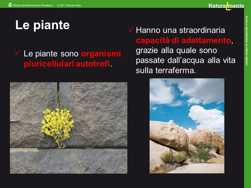 Le piante Le piante sono organismi pluricellulari autotrofi.