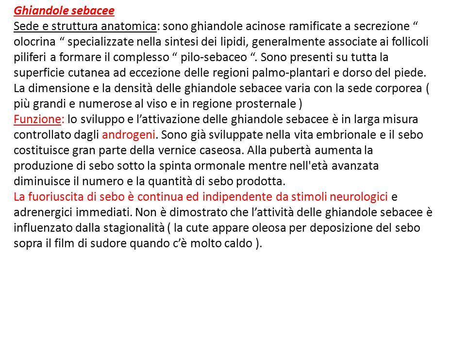 """Ghiandole sebacee Sede e struttura anatomica: sono ghiandole acinose ramificate a secrezione """" olocrina """" specializzate nella sintesi dei lipidi, gene"""