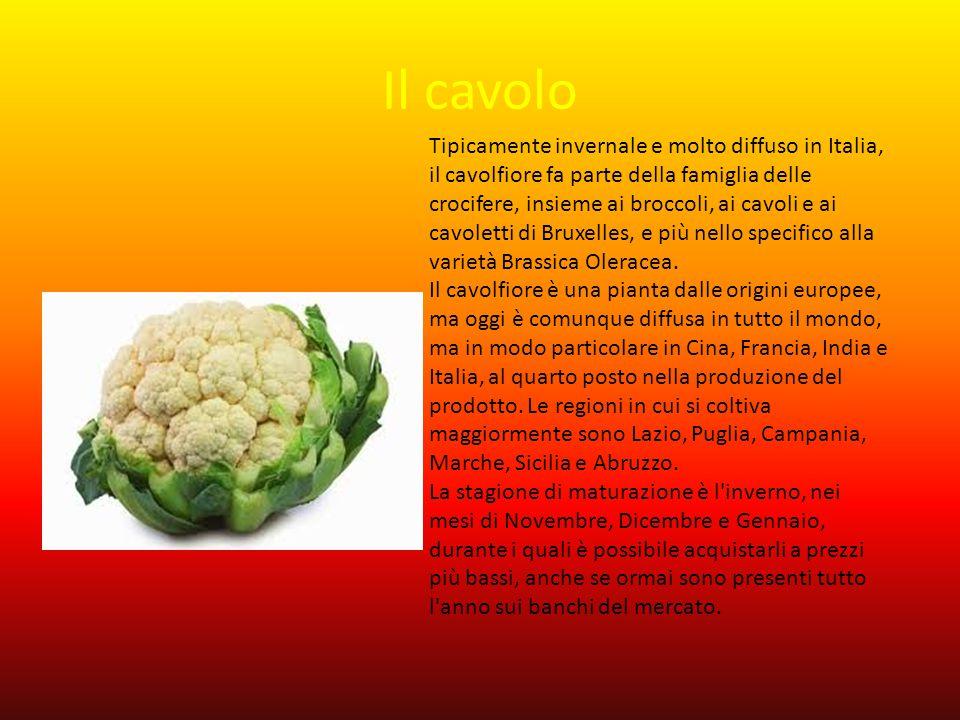 Il cavolo Tipicamente invernale e molto diffuso in Italia, il cavolfiore fa parte della famiglia delle crocifere, insieme ai broccoli, ai cavoli e ai