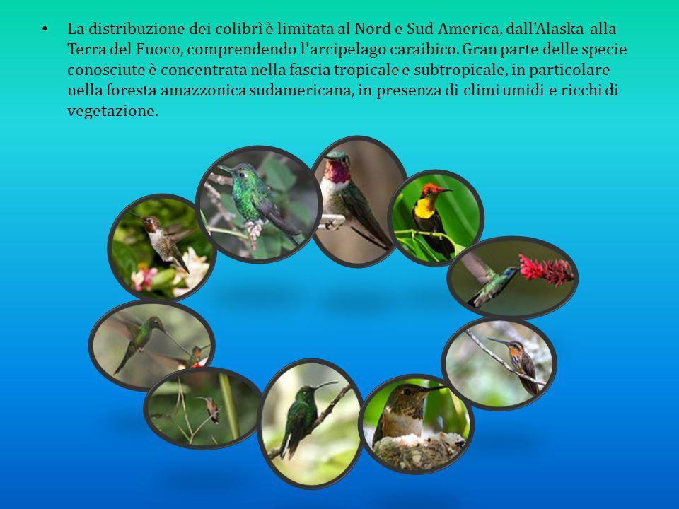 La distribuzione dei colibrì è limitata al Nord e Sud America, dall'Alaska alla Terra del Fuoco, comprendendo l'arcipelago caraibico. Gran parte delle