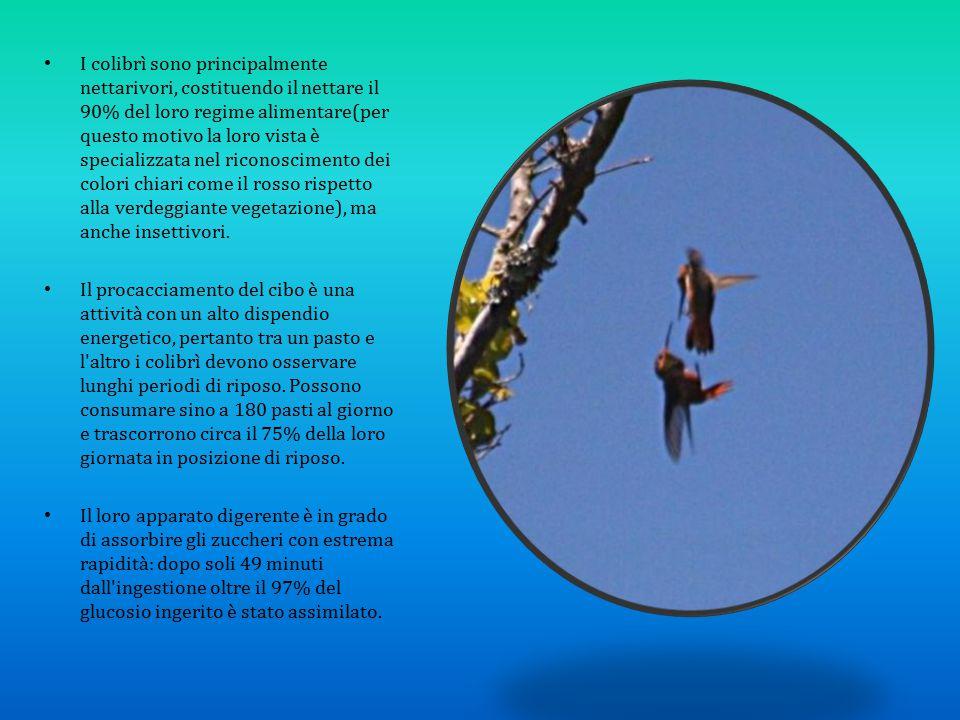 I colibrì sono principalmente nettarivori, costituendo il nettare il 90% del loro regime alimentare(per questo motivo la loro vista è specializzata ne