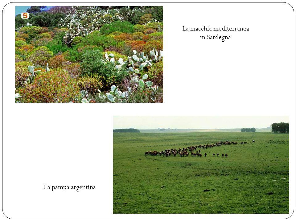La macchia mediterranea in Sardegna La pampa argentina