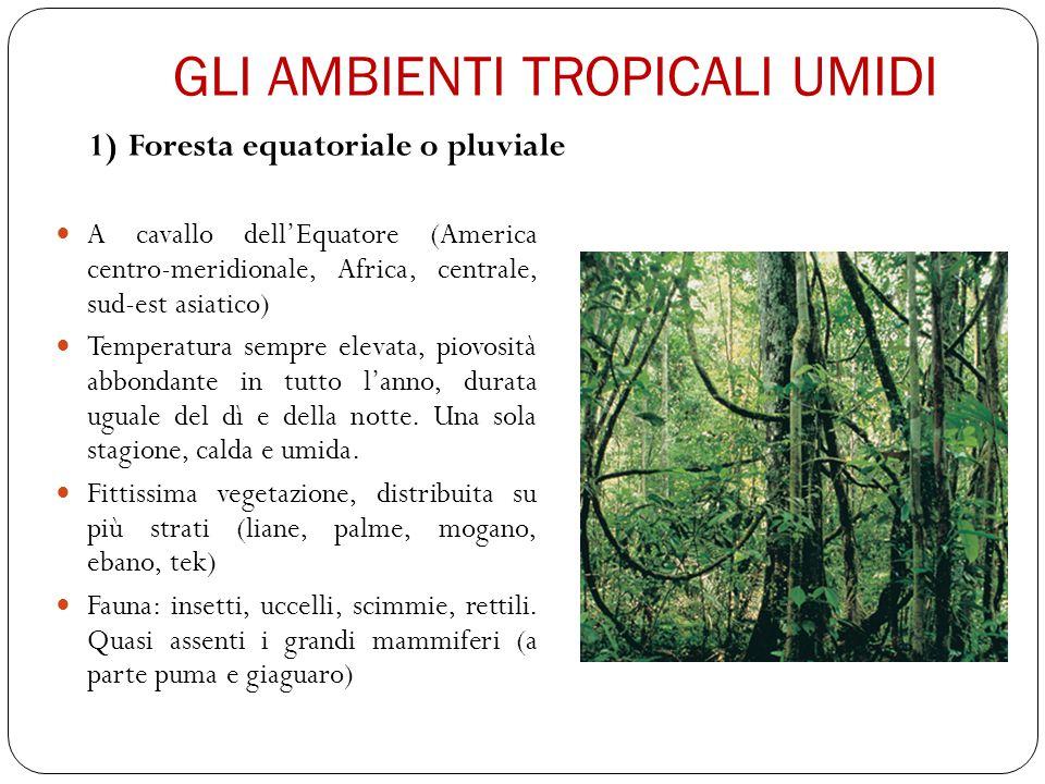 GLI AMBIENTI TROPICALI UMIDI 2) Foresta monsonica o giungla: Paesi dell'Asia affacciati sull'Oceano Indiano.