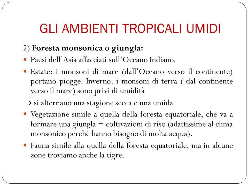 GLI AMBIENTI TROPICALI UMIDI 2) Foresta monsonica o giungla: Paesi dell'Asia affacciati sull'Oceano Indiano. Estate: i monsoni di mare (dall'Oceano ve