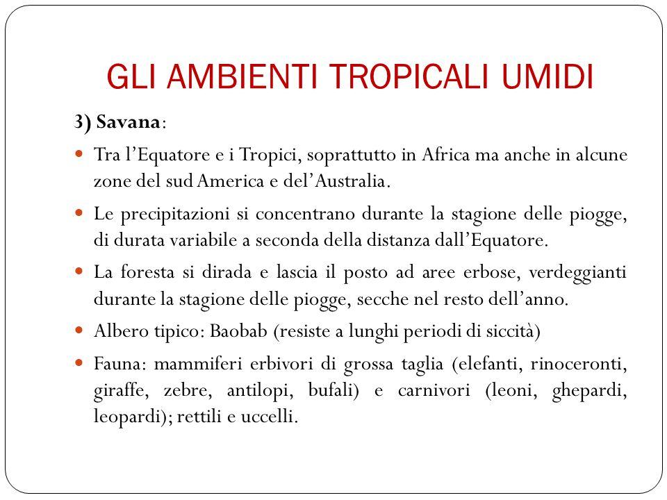 GLI AMBIENTI TROPICALI UMIDI 3) Savana: Tra l'Equatore e i Tropici, soprattutto in Africa ma anche in alcune zone del sud America e del'Australia. Le