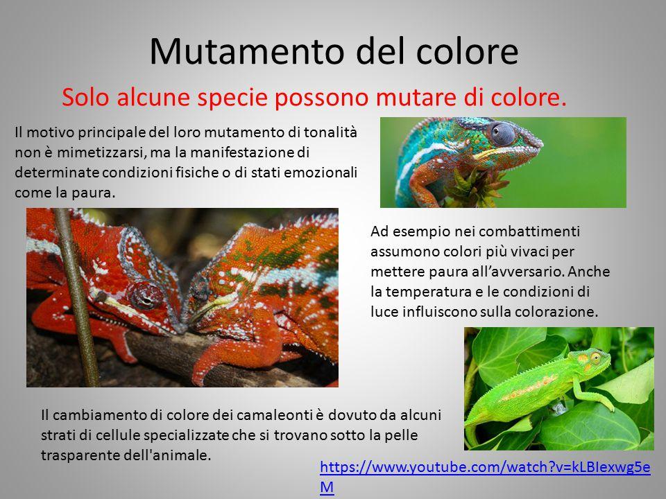 Mutamento del colore Solo alcune specie possono mutare di colore.