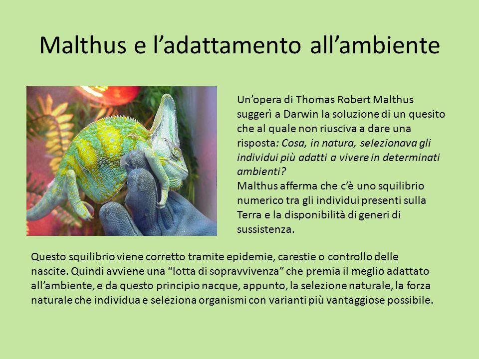 Malthus e l'adattamento all'ambiente Un'opera di Thomas Robert Malthus suggerì a Darwin la soluzione di un quesito che al quale non riusciva a dare un