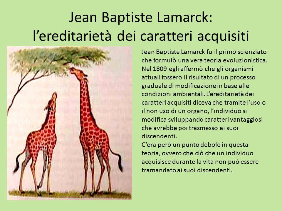 Jean Baptiste Lamarck: l'ereditarietà dei caratteri acquisiti Jean Baptiste Lamarck fu il primo scienziato che formulò una vera teoria evoluzionistica