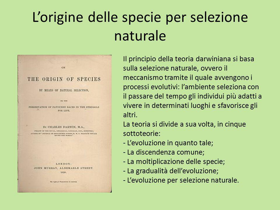 L'origine delle specie per selezione naturale Il principio della teoria darwiniana si basa sulla selezione naturale, ovvero il meccanismo tramite il q