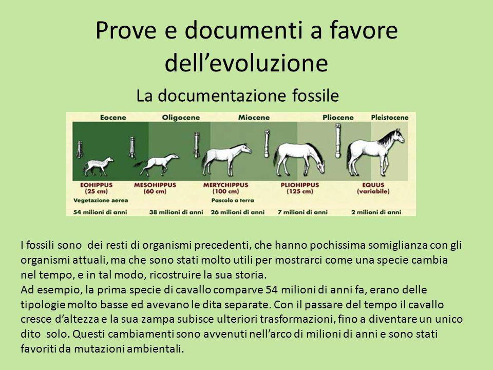 Prove e documenti a favore dell'evoluzione La documentazione fossile I fossili sono dei resti di organismi precedenti, che hanno pochissima somiglianz