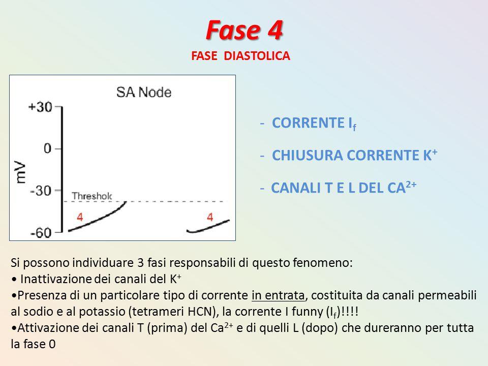 Fase 4 FASE DIASTOLICA - CORRENTE I f - CHIUSURA CORRENTE K + - CANALI T E L DEL CA 2+ Si possono individuare 3 fasi responsabili di questo fenomeno:
