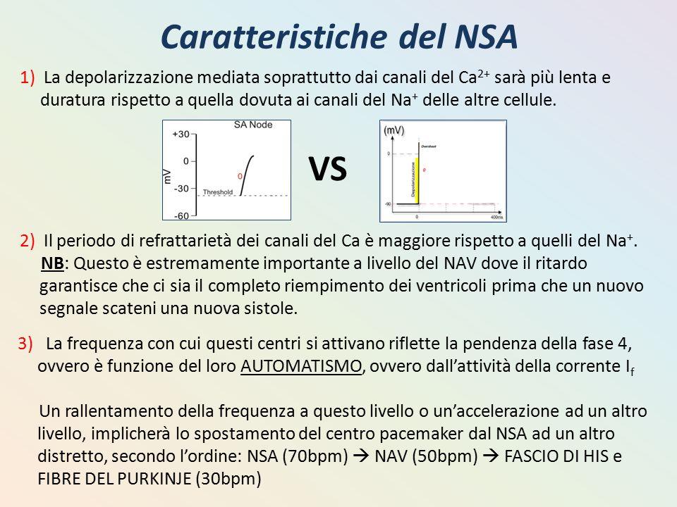 Caratteristiche del NSA 1) La depolarizzazione mediata soprattutto dai canali del Ca 2+ sarà più lenta e duratura rispetto a quella dovuta ai canali d