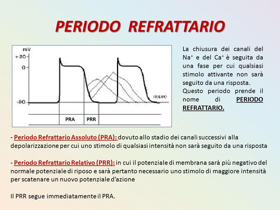 PERIODO REFRATTARIO La chiusura dei canali del Na + e del Ca + è seguita da una fase per cui qualsiasi stimolo attivante non sarà seguito da una rispo