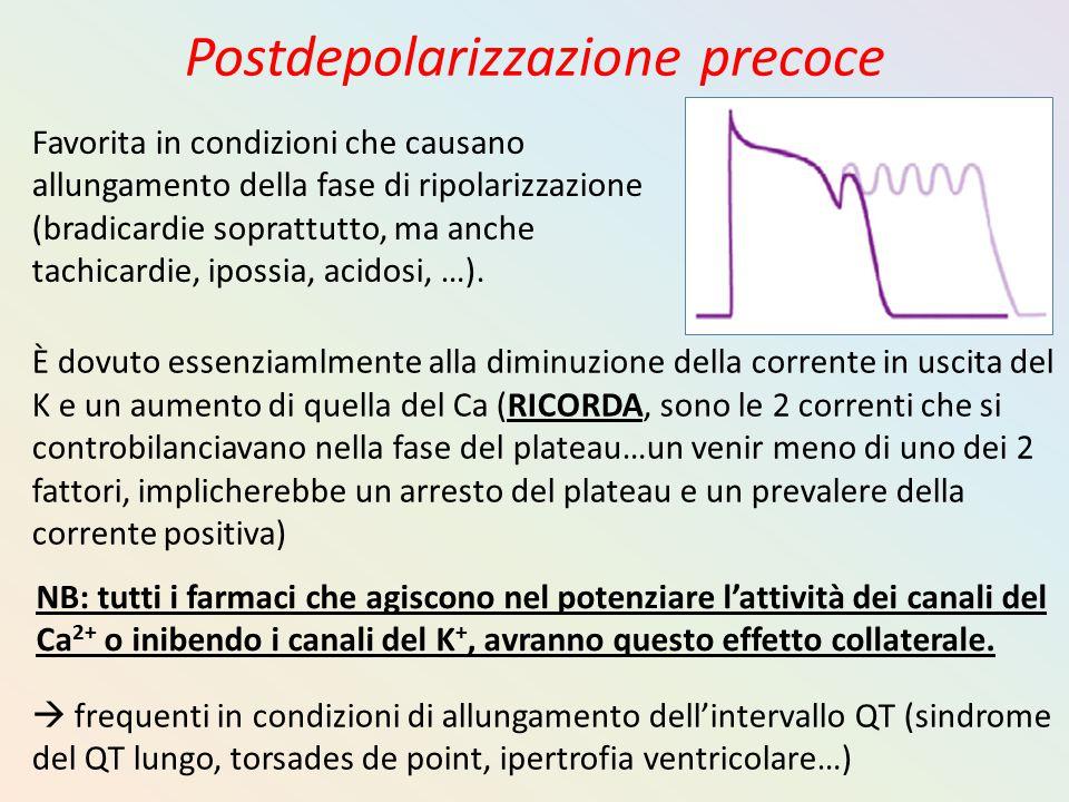 Postdepolarizzazione precoce È dovuto essenziamlmente alla diminuzione della corrente in uscita del K e un aumento di quella del Ca (RICORDA, sono le