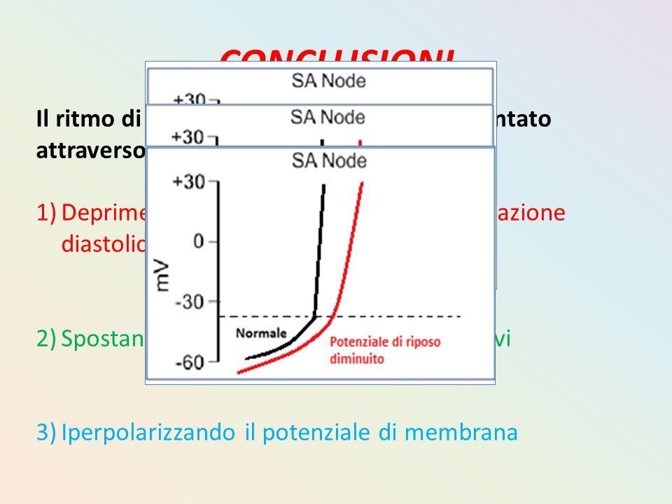 CONCLUSIONI Il ritmo di un pacemaker potrà venire rallentato attraverso 3 modi: 1)Deprimendo la pendenza della depolarizzazione diastolica 2)Spostando