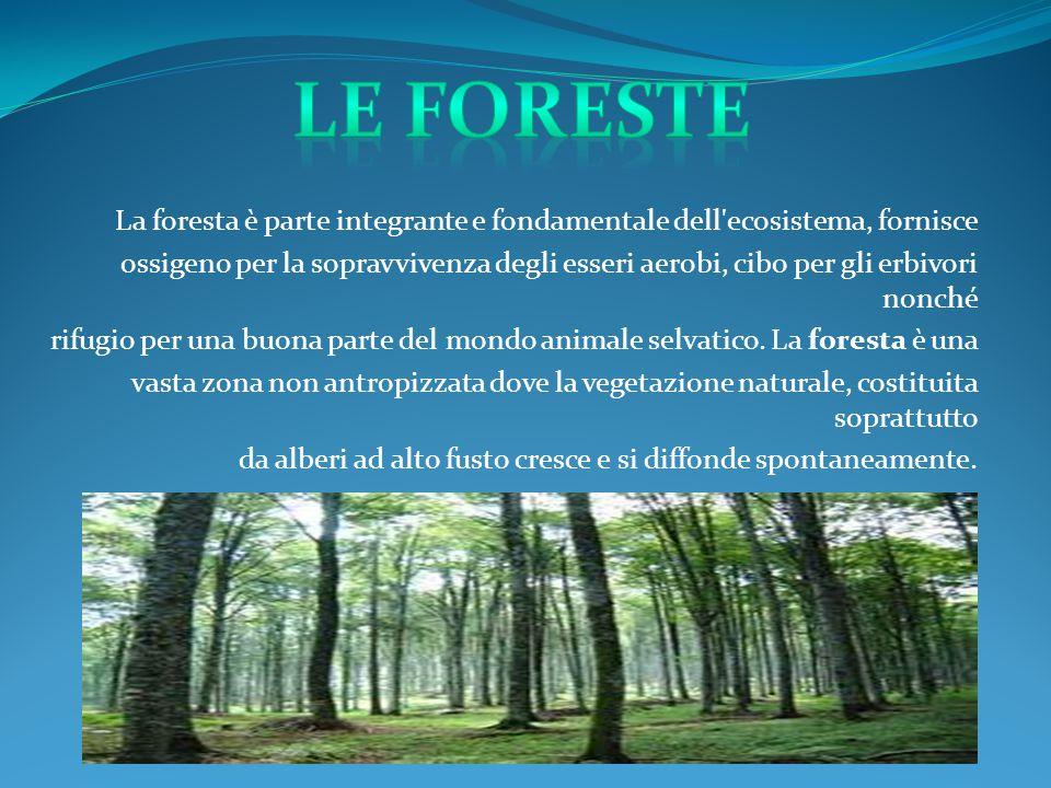 La foresta è parte integrante e fondamentale dell'ecosistema, fornisce ossigeno per la sopravvivenza degli esseri aerobi, cibo per gli erbivori nonché